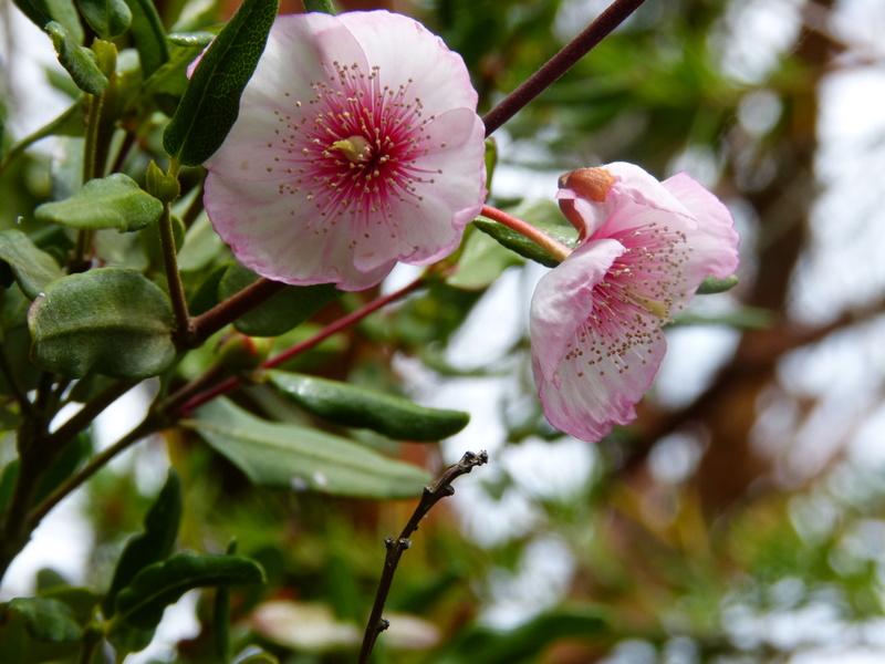 jardins d'été, jardins se plaisent Eucryp12