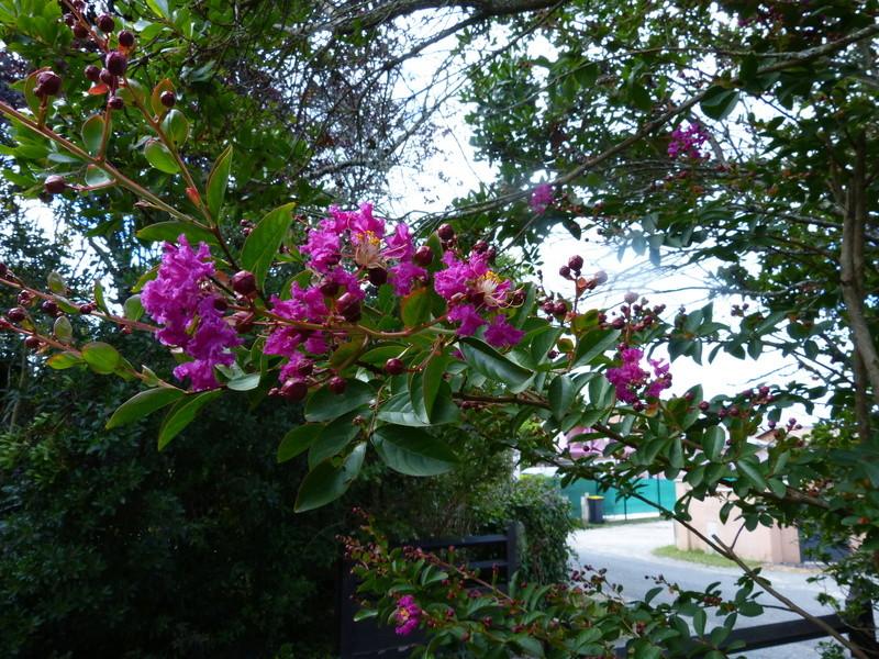 jardins d'été, jardins se plaisent Lagers10