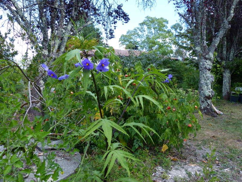 jardins d'été, jardins se plaisent Solanu10