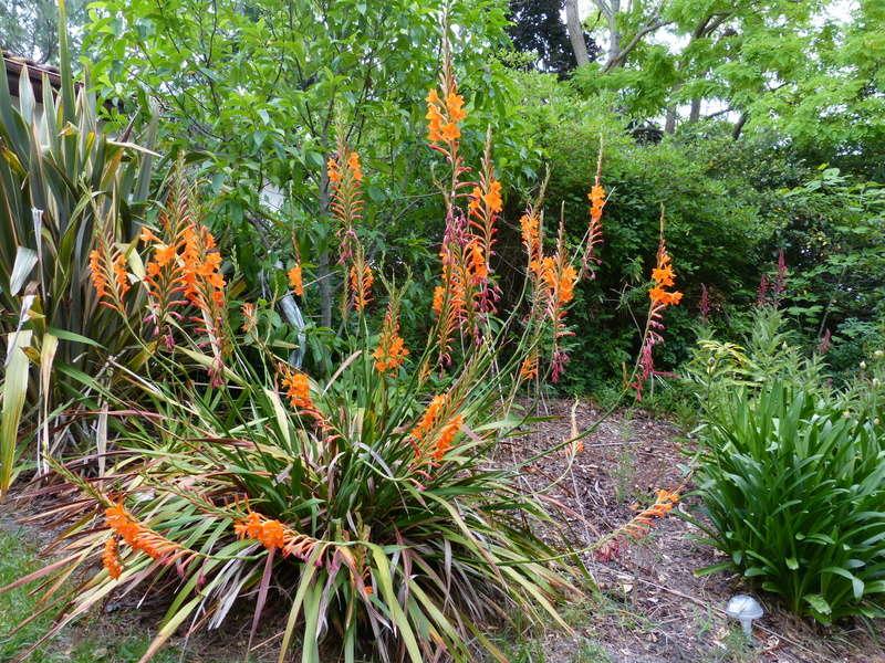 ces quelques fleurs de nos jardins - Page 4 Watson11