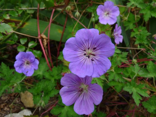 jardins d'été, jardins se plaisent P1040515