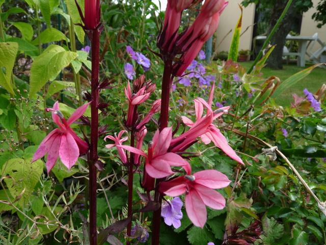 jardins d'été, jardins se plaisent P1040517