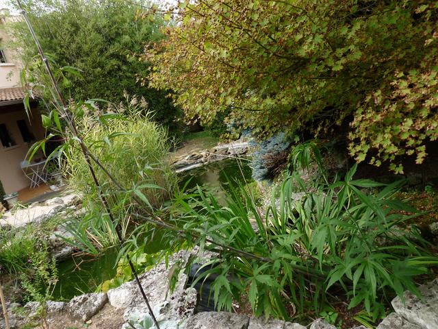 jardins d'été, jardins se plaisent - Page 3 P1040524
