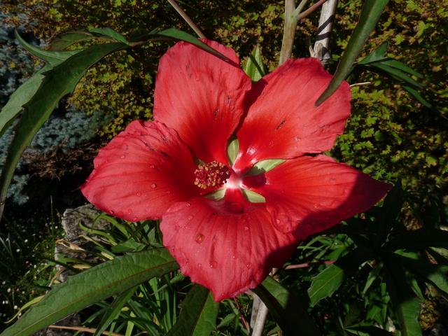 encore des beaux jours au jardin  P1040613