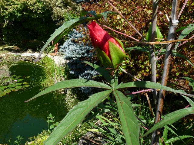 encore des beaux jours au jardin  P1040614