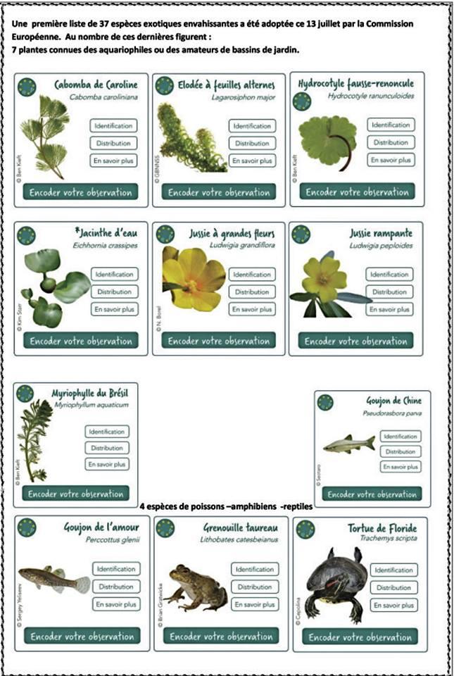 Existence d'une liste d'espèces invasives ? Invasi11