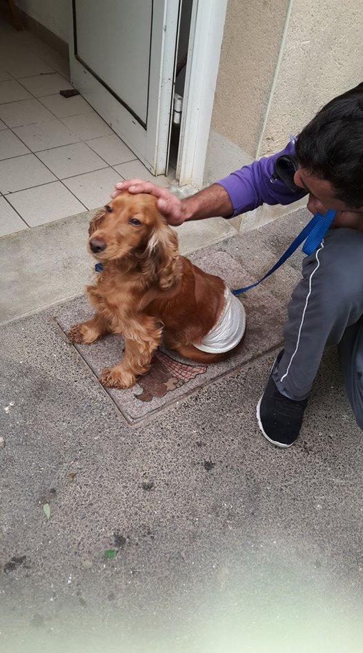 adoption de LADY 21544110