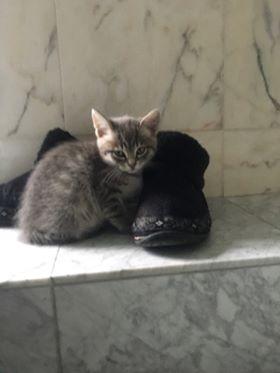 nouvelles de MARLEY le chat 21624211
