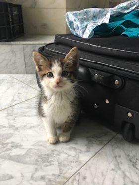 nouvelles de MARLEY le chat 21763710
