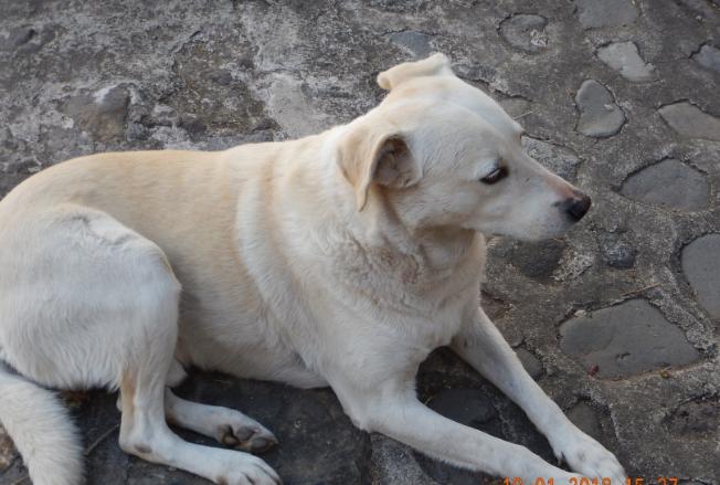 Pls. Help! Missing Dog Image_10