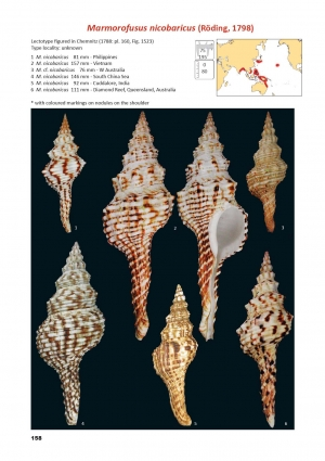 Nouveau livre sur les Fasciolariidae par A. Robin et D. Mallard Plate-10