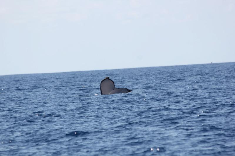 Baleines Img_0311