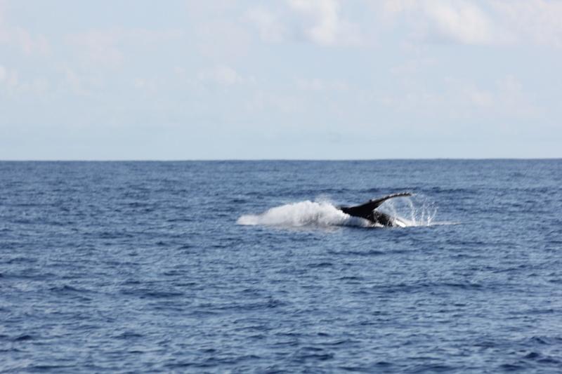 Baleines Img_0320