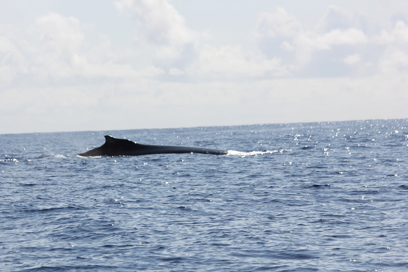 Baleines Img_0321