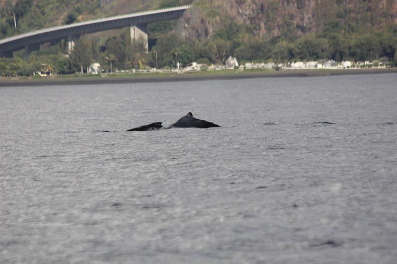 Baleines Img_0322