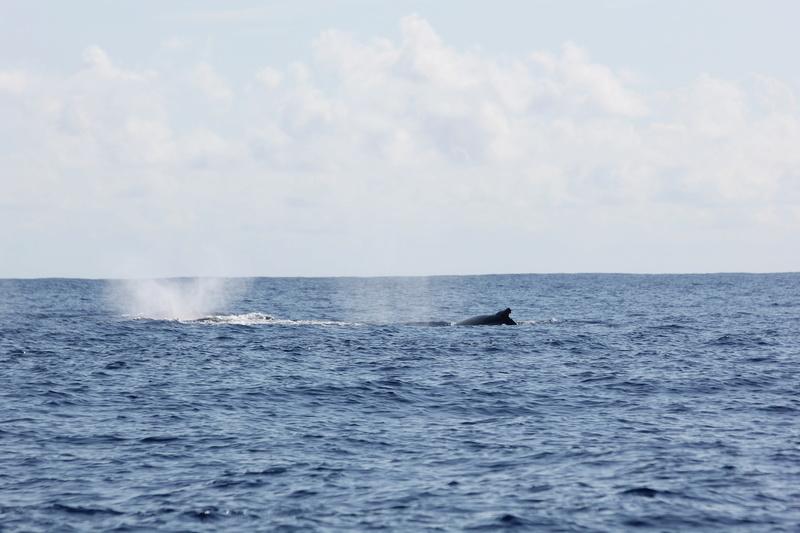 Baleines Img_0325
