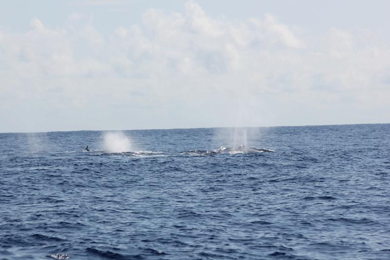 Baleines Img_0326