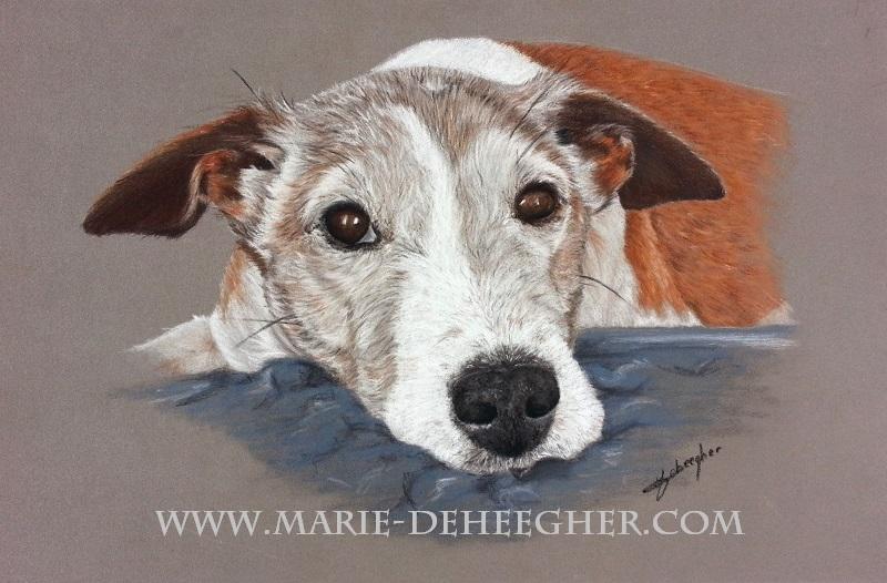 Marie Deheegher - Artiste Animalier - Page 3 Buck-f10