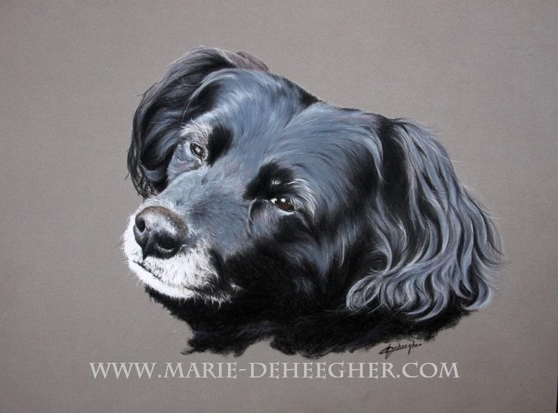 Marie Deheegher - Artiste Animalier - Page 3 Chipie10