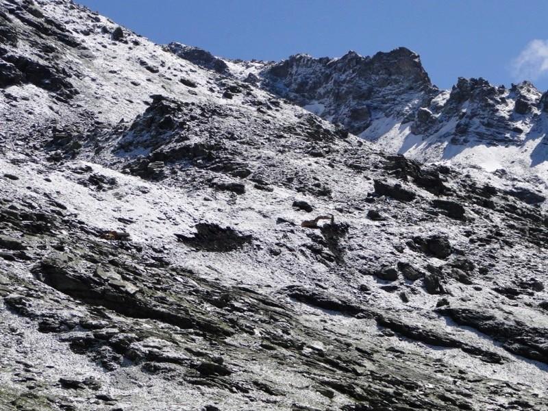 [La Rosière] UTN Mont Valaisan - Page 3 Dsc05328