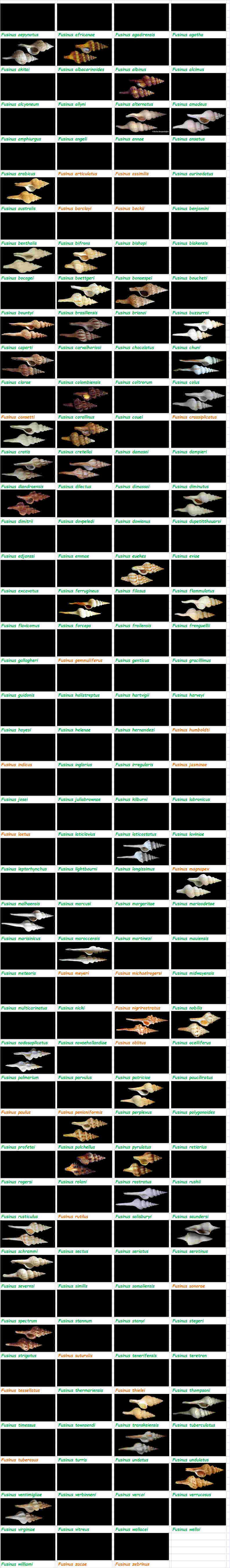 Fasciolariidae Fusininae Fusinus - Le genre, ses espèces, la planche Fascio21