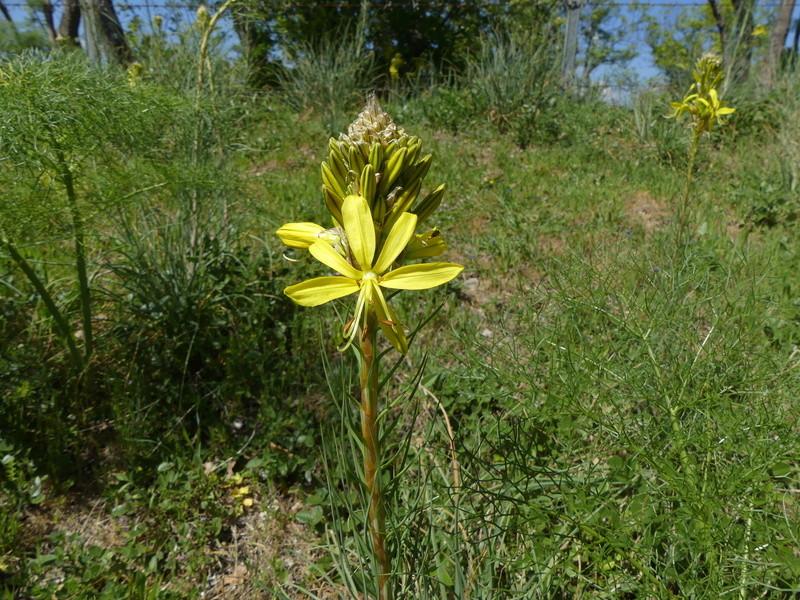 visitez la sicile vous ne serez pas decus (7 au 28 avril) P1120116