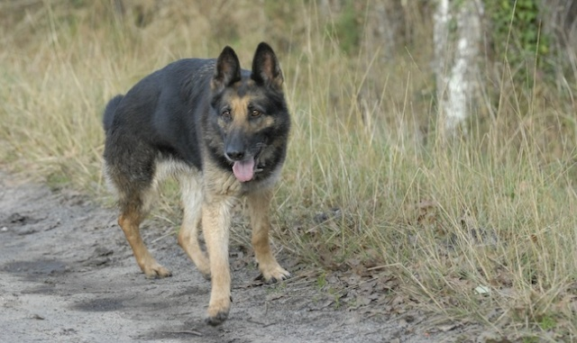Rencontre canine du forum en région bordelaise (33) - Page 2 _dsc0310