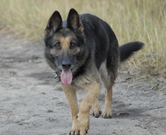 Rencontre canine du forum en région bordelaise (33) - Page 2 _dsc0311