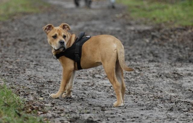 Rencontre canine du forum en région bordelaise (33) - Page 2 _dsc0312