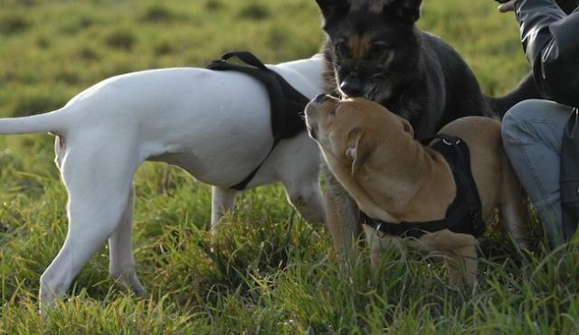 Rencontre canine du forum en région bordelaise (33) - Page 2 _dsc0411