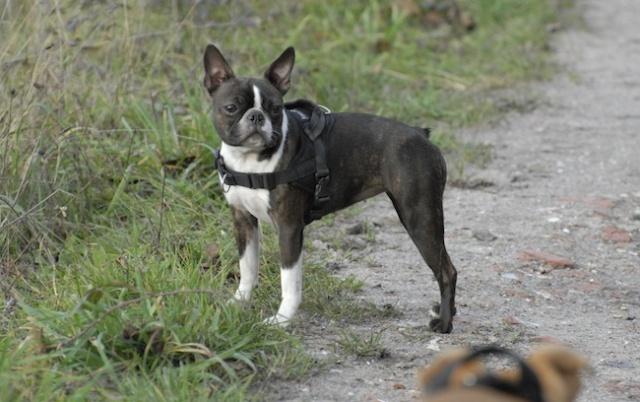 Rencontre canine du forum en région bordelaise (33) - Page 2 _dsc0412