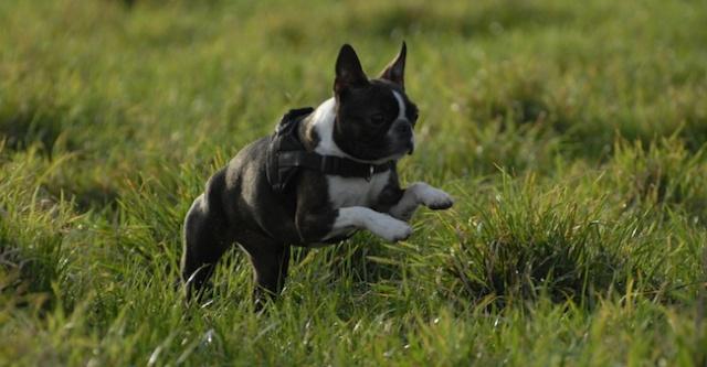 Rencontre canine du forum en région bordelaise (33) - Page 2 _dsc0413