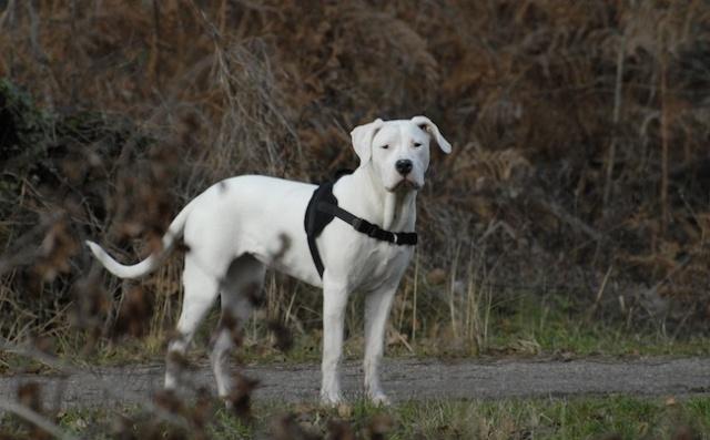 Rencontre canine du forum en région bordelaise (33) - Page 2 _dsc0415