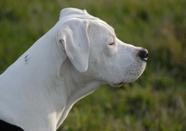 Rencontre canine du forum en région bordelaise (33) - Page 2 _dsc0512