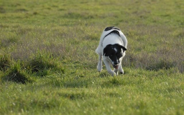 Rencontre canine du forum en région bordelaise (33) - Page 2 _dsc0513