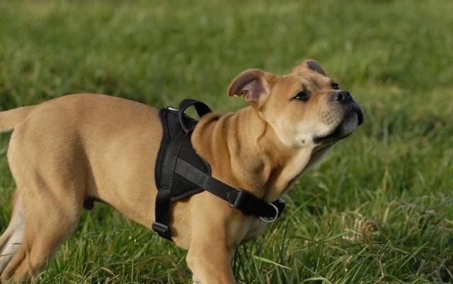 Rencontre canine du forum en région bordelaise (33) - Page 2 _dsc0514