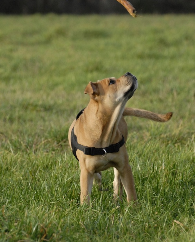 Rencontre canine du forum en région bordelaise (33) - Page 2 _dsc0515