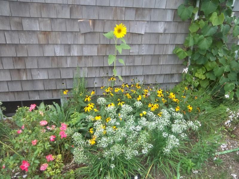 New England September 2017 02010