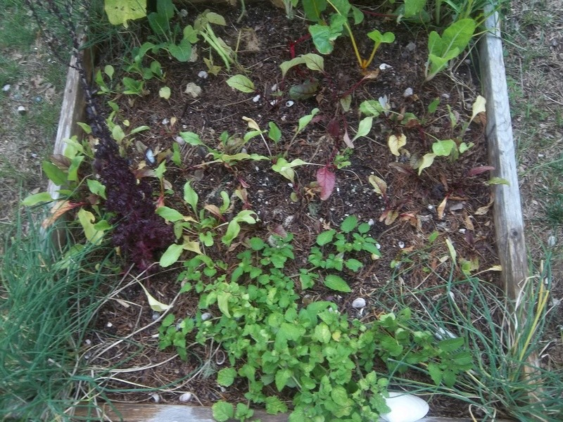 Ground Cherries - Page 5 04310