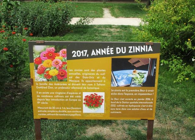 2017, année du Zinnia au Jardin des Plantes de Paris / Fleur Spatiale Img_1211