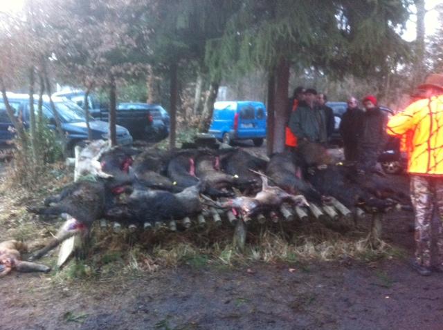 Saison de chasse au Grand Gibier 2012/2013 - Page 38 Haguen11