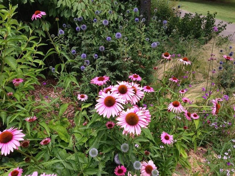 ces quelques fleurs de nos jardins - Page 4 Img_2711