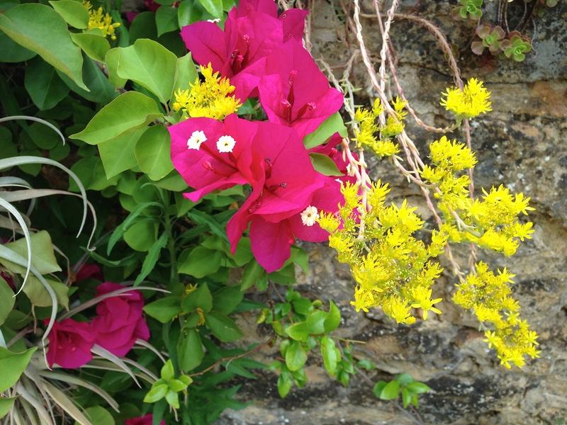 ces quelques fleurs de nos jardins - Page 4 Img_2810
