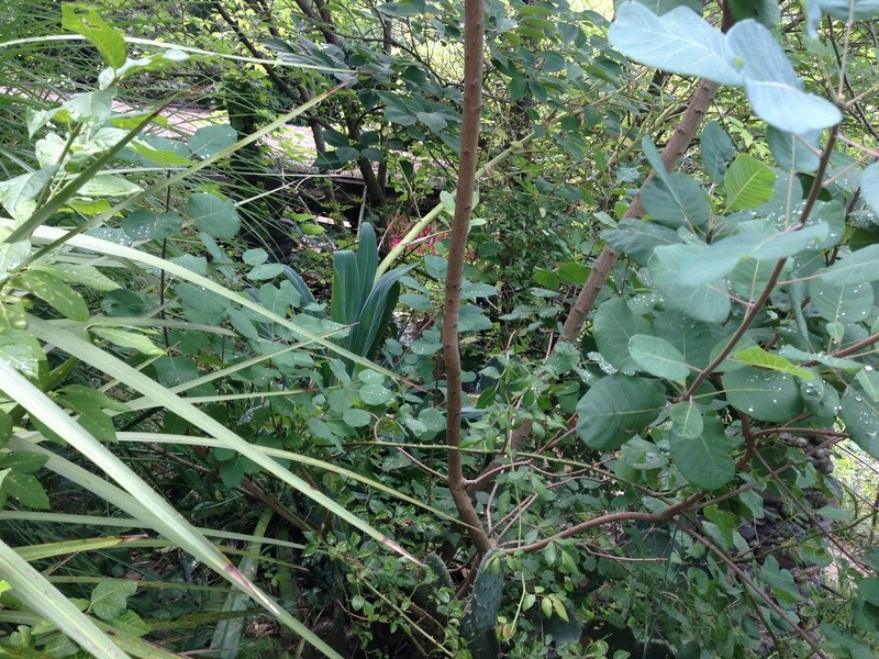 (30) Jardin des Sambucs - Cévennes Img_2825