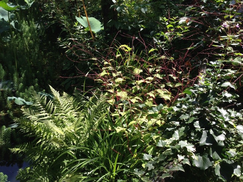 (30) Jardin des Sambucs - Cévennes Img_2826