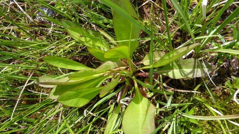 Verdure au marais Marais10