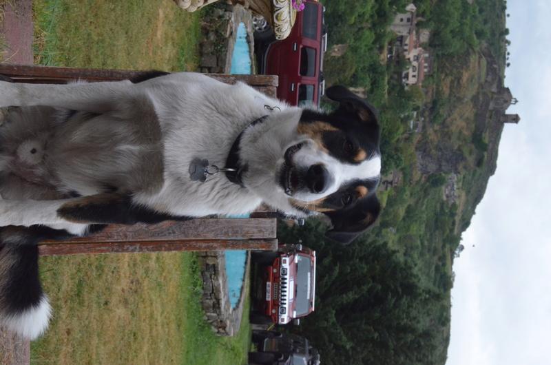 Photos de votre Hummer & animal de compagnie - Page 3 9sc_9710