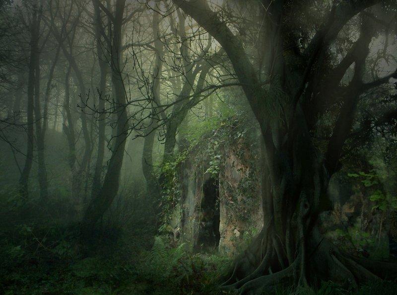Rêve de fée : relaxation au coeur de Brocéliande Forest10