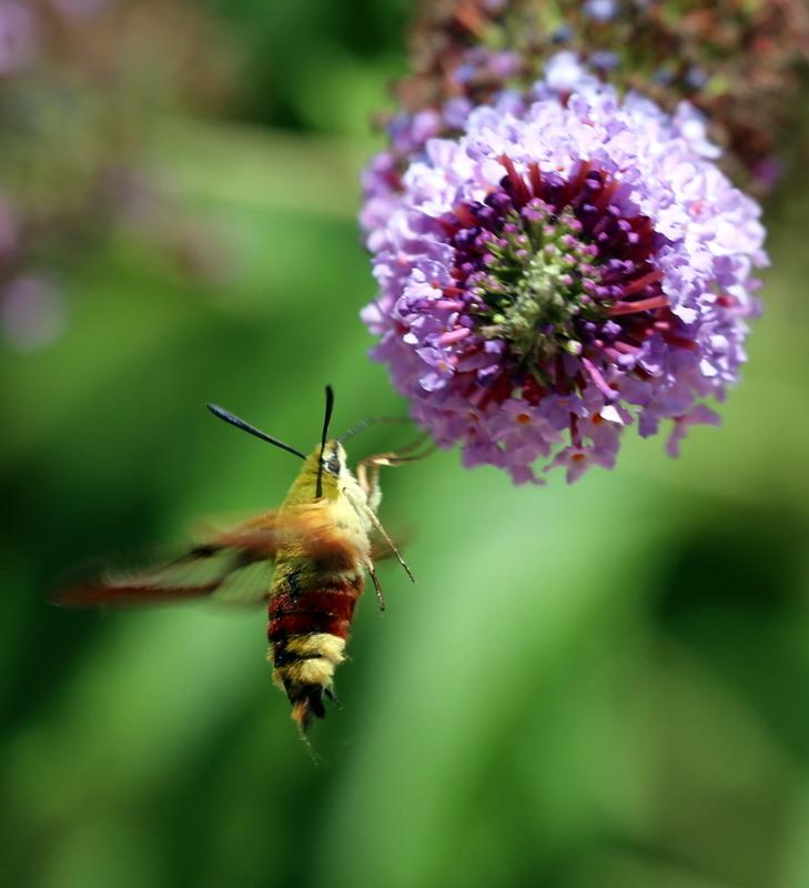 Le monde merveilleux des insectes - Page 4 Ob_f0610