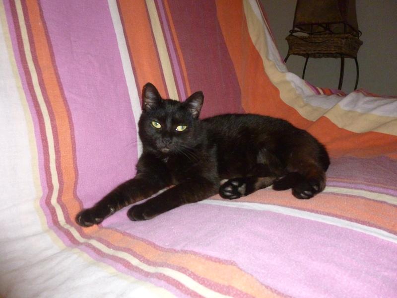 LUCY, adorable petite panthère noire de salon de 11 mois P1040210